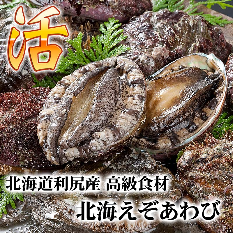 北海道利尻産の高級エゾアワビ