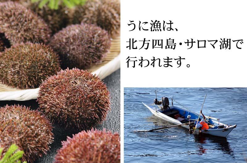 ウニ漁の期間