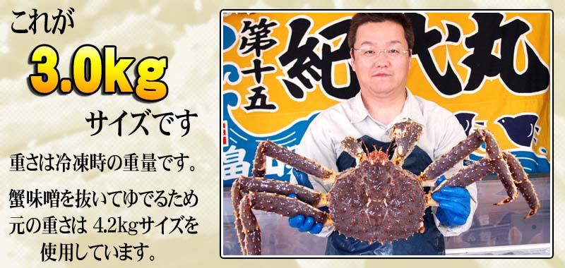 たらば蟹のサイズ