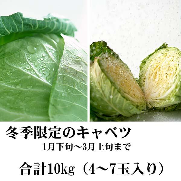 【送料無料】北海道和寒産 越冬キャベツ 合計10kg(4〜8玉入り) 雪の下キャベツ