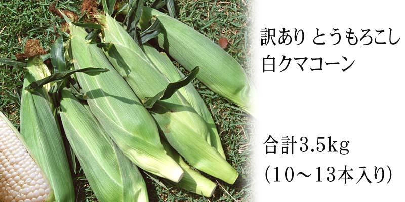 旭山動物園白くまコーン(訳あり品)