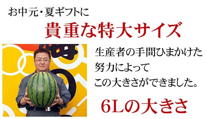 北海道産マドンナスイカのサイズ