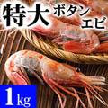 特大子持ち ボタンエビ 2L〜3Lサイズ 1kg(11〜16尾入) 海鮮えびお取り寄せ