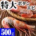 特大子持ち ボタンエビ 2L〜3Lサイズ 500g(5〜8尾入) 海鮮えびお取り寄せ