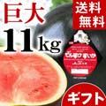 【送料無料】当麻町産 デンスケスイカ 秀品 超特大 6Lサイズ 11kg以上 黒皮のスイカです。【旬のフルーツ くだものギフト】