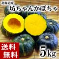 【送料無料】小玉カボチャ 坊ちゃんかぼちゃ 合計5kg(8〜10玉入り)