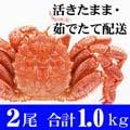 北海道産 活毛ガニ 500g前後 2尾入り かにの美味しさを味わうなら、やっぱり活蟹!活け毛がに通販