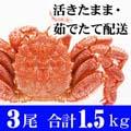 北海道産 活毛ガニ 500g前後 3尾入り かにの美味しさを味わうなら、やっぱり活蟹!活け毛がに通販
