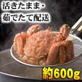 北海道産 活毛がにお取り寄せ 600g前後 活カニ通販 かにの美味しさを味わうなら、やっぱり活蟹!活け毛がに