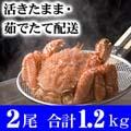 北海道産 活毛がに 600g前後 2尾入り 活カニ通販 かにの美味しさを味わうなら、やっぱり活蟹!活け毛がに
