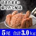 北海道産 活毛がに 600g前後 5尾入り 活カニ通販 かにの美味しさを味わうなら、やっぱり活蟹!活け毛がに