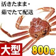 活ズワイカニ姿 800g(大サイズ) ・茹でたてのずわいがに、お刺身でも食べられる活蟹です。松葉蟹