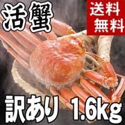 【送料無料】訳あり 活ズワイガニ通販 2〜3尾入りで合計1.6kg前後 (サイズ不確定) わけありだから格安の活けずわいがに。甘みがある蟹なので、ぜひお刺身で。松葉蟹