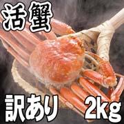 訳あり 活ズワイガニ通販 2〜5尾入りで合計2kg前後 (サイズ不確定) わけありだから格安の活けずわいがに。甘みがある蟹なので、ぜひお刺身で。松葉蟹