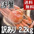 【送料無料】訳あり 活ズワイガニ通販 2〜4尾入りで合計2.2kg前後 (サイズ不確定) わけありだから格安の活けずわいがに。甘みがある蟹なので、ぜひお刺身で。松葉蟹