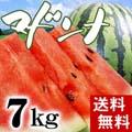 【送料無料】富良野・浦臼産マドンナすいか 秀品 2Lサイズ 7〜8kg 【旬のフルーツ くだもの】【ギフト】