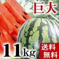 【送料無料】富良野・浦臼産マドンナスイカ 秀品 6Lサイズ 11kg以上 【旬のフルーツ くだもの】【ギフト】