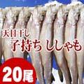 子持ち本シシャモ 20尾入り (大サイズ) ご飯のおかず、お酒のおつまみに最適なししゃも!ぷちぷち卵の食感も最高! 焼き魚