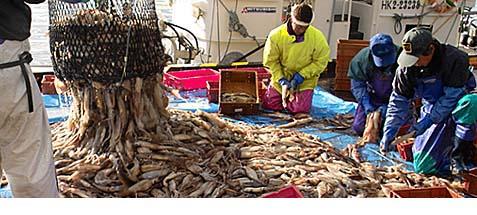 函館のイカ漁の様子