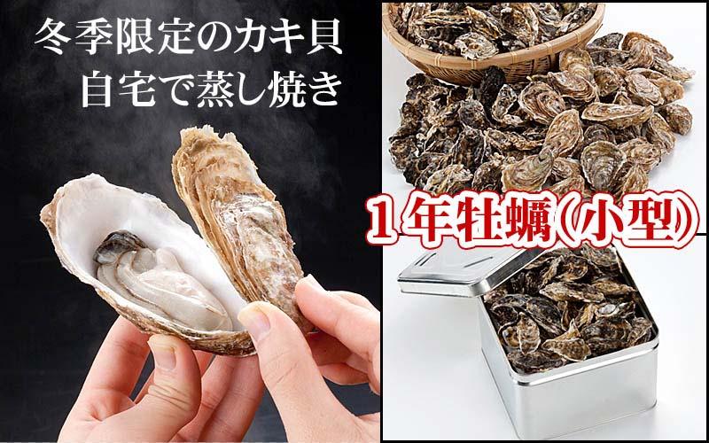 冬季限定のカキ貝 1年牡蠣