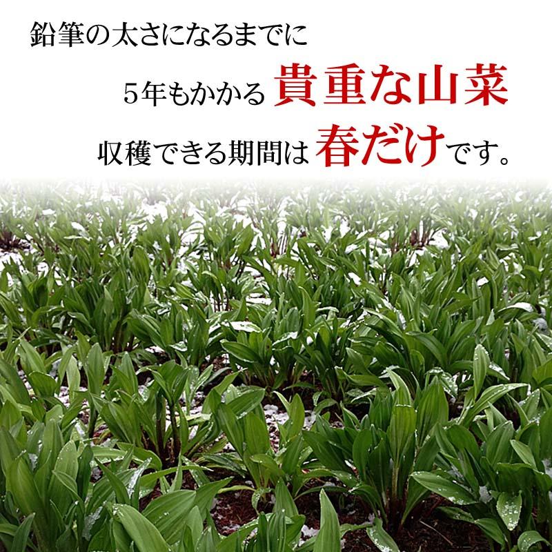 ギョウジャニンニクの収穫