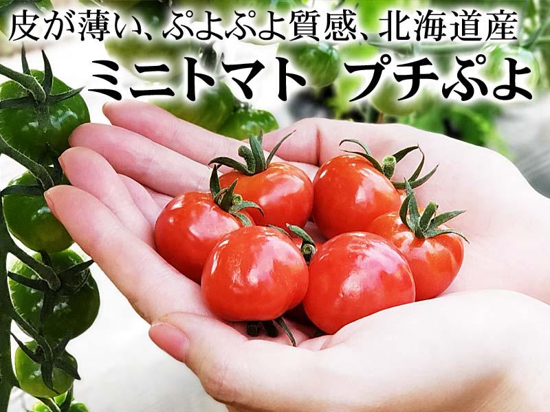 ミニトマト プチぷよ